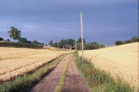 Chalk Hills and Scarps + Towards Old Wellbury, Hertfordshire (© HCC Landscape)