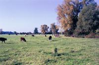 Lowland Village Farmlands + Field, Astrope, Hertfordshire (© HCC Landscape)