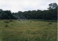 Upton Marsh SSSI (© Simon Odell)