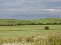 Chalk Hills and Scarps + The Upper Chalk scarp at Bird Hill, Clothall, Herts.  (© Geo-East)