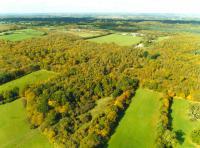 Bencroft Wood, Hertfordshire (© HCC Rural Estates)