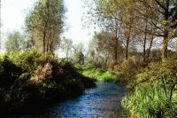 Valley Meadowlands - River Ver at Drop lane, Hertfordshire (© HCC Landscape)